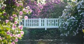 rhododendronbluete-schloss-luetetsburg