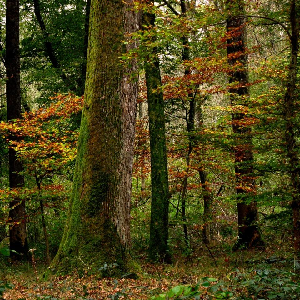 Im Wald überleben