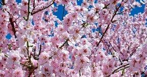 kachel_botanik