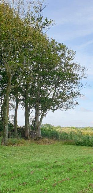 """Baum Nr. 182 """"Buche"""""""