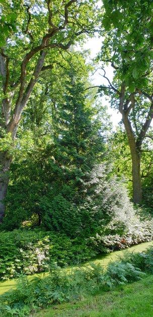 """Baum Nr. 192 """"Riesenlebensbaum"""""""