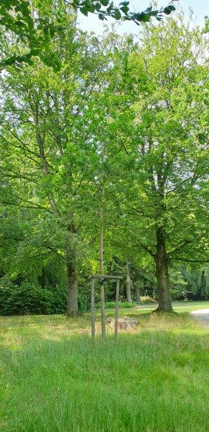 """Baum Nr. 196 """"Eiche"""""""