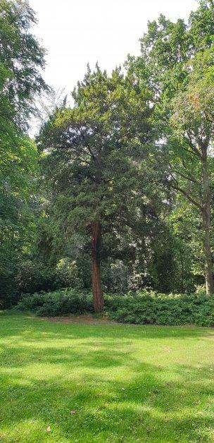 """Baum Nr. 198 """"Eibe"""""""