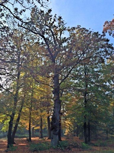 """Baum Nr. 89 """"Eiche"""""""