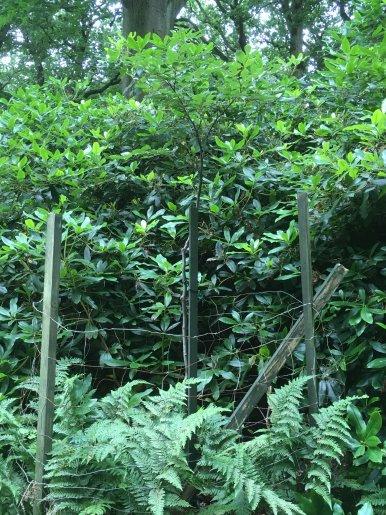 """Baum Nr. 63 """"Buche"""""""