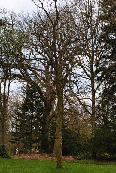 """Baum Nr. 10 """"Eiche"""""""