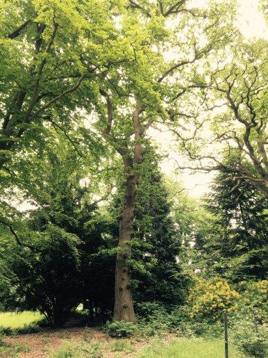 """Baum Nr. 104 """"Eiche"""""""