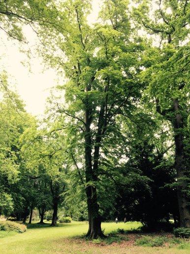 """Baum Nr. 105 """"Buche"""""""