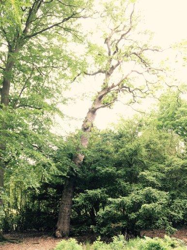 """Baum Nr. 106 """"Eiche"""""""