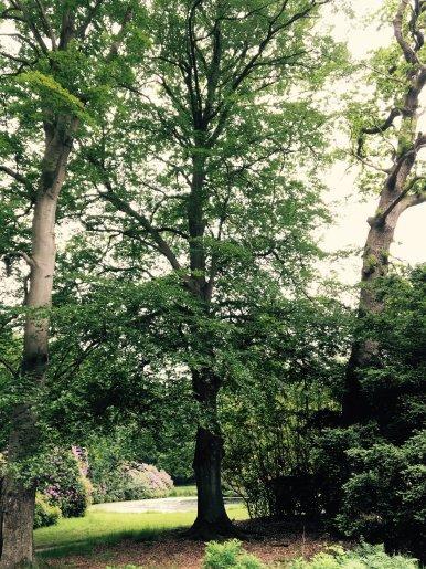 """Baum Nr. 107 """"Buche"""""""