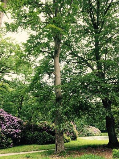 """Baum Nr. 108 """"Buche"""""""