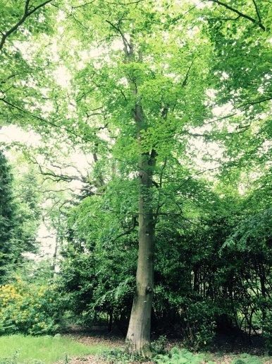"""Baum Nr. 111 """"Buche"""""""