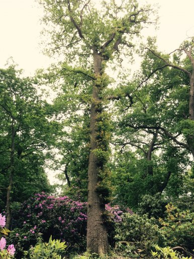 """Baum Nr. 113 """"Eiche"""""""