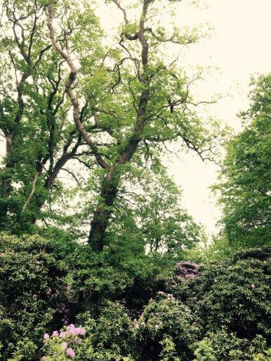 """Baum Nr. 114 """"Eiche"""""""