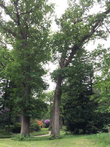 """Baum Nr. 117 """"Eiche"""""""