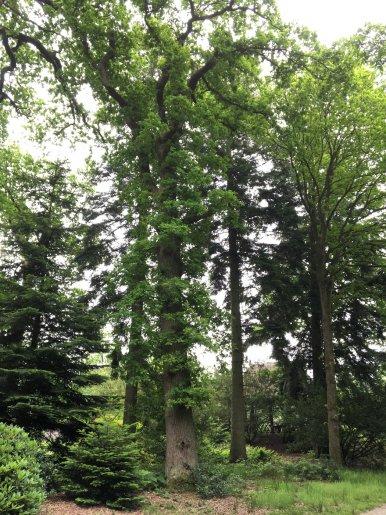 """Baum Nr. 119 """"Eiche"""""""