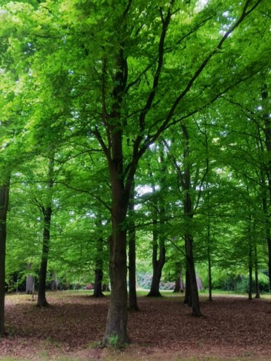 """Baum Nr. 121 """"Buche"""""""