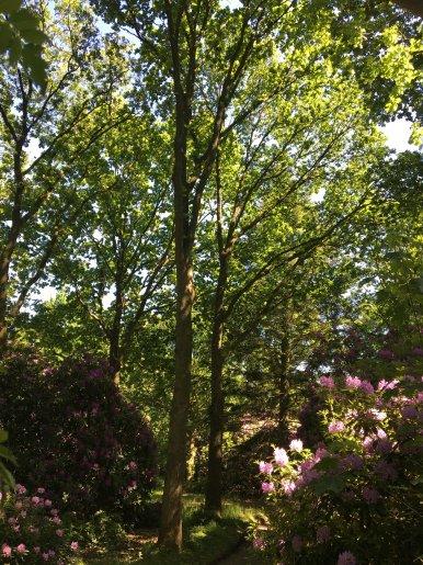 """Baum Nr. 137 """"Eiche"""""""