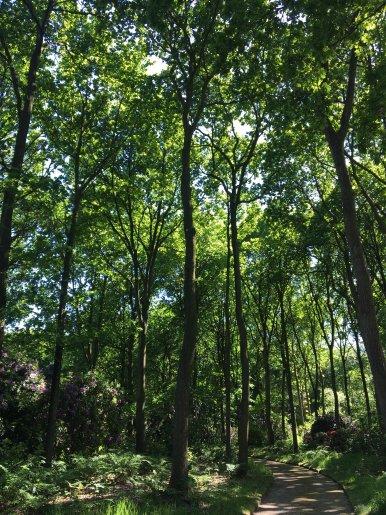 """Baum Nr. 141 """"Eiche"""""""