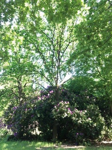 """Baum Nr. 143 """"Eiche"""""""