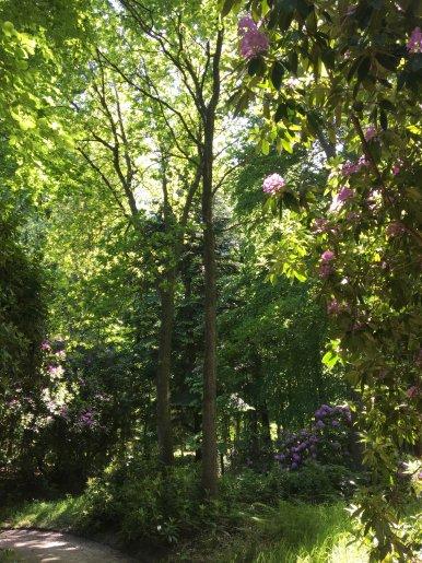 """Baum Nr. 145 """"Eiche"""""""