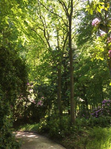 """Baum Nr. 146 """"Eiche"""""""