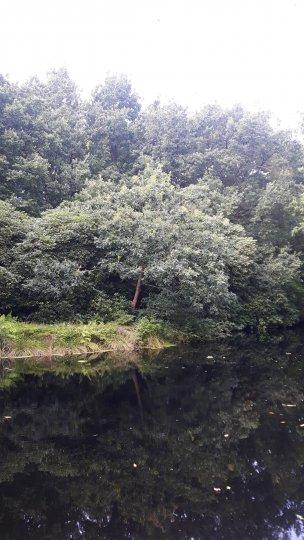 """Baum Nr. 173 """"Persische Eiche"""""""