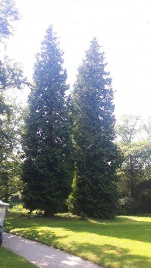 "Baum Nr. 174 ""Lebensbaum"""