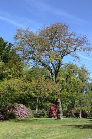 """Baum Nr. 21 """"Eiche"""""""