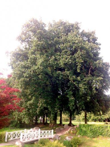 """Baum Nr. 23 """"Eiche"""""""