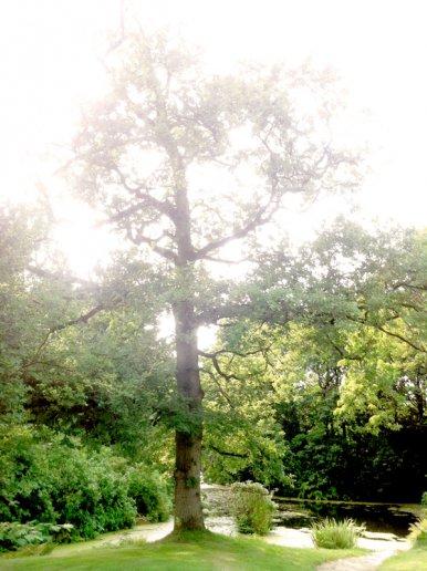 """Baum Nr. 25 """"Eiche"""""""