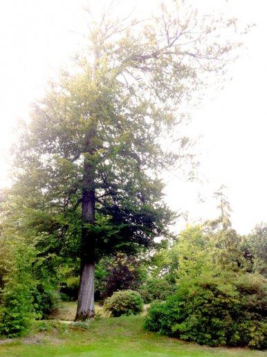 """Baum Nr. 27 """"Buche"""""""