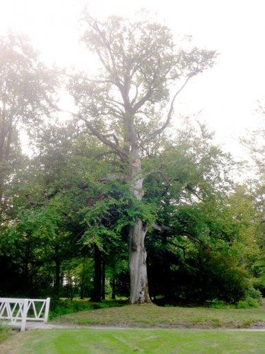 """Baum Nr. 28 """"Buche"""""""