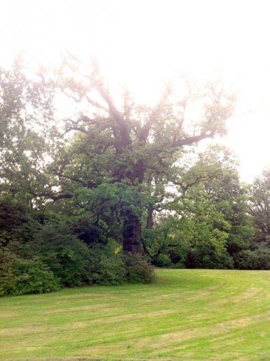 """Baum Nr. 32 """"Eiche"""""""