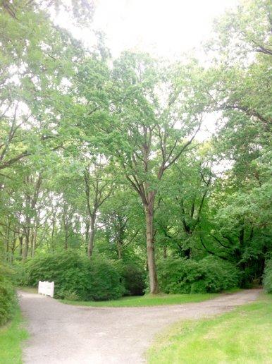 """Baum Nr. 34 """"Eiche"""""""