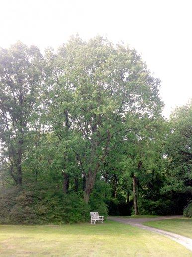 """Baum Nr. 38 """"Eiche"""""""