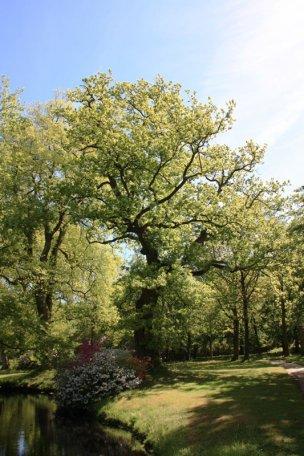 """Baum Nr. 45 """"Eiche"""""""