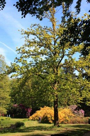 """Baum Nr. 69 """"Eiche"""""""