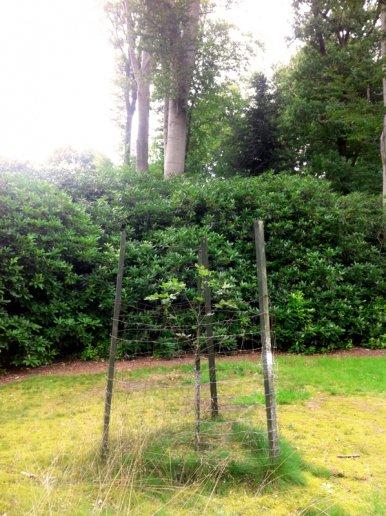 """Baum Nr. 80 """"Buche"""""""
