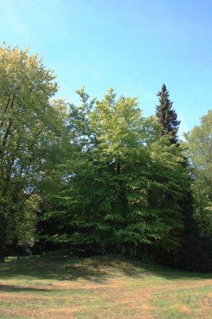 """Baum Nr. 82 """"Buche"""""""