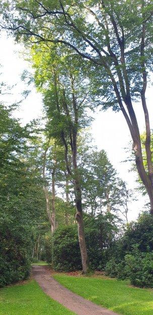 """Baum Nr. 203 """"Buche"""""""