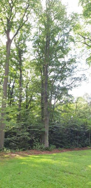 """Baum Nr. 206 """"Buche"""""""