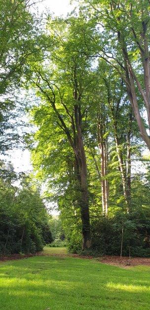 """Baum Nr. 207 """"Buche"""""""