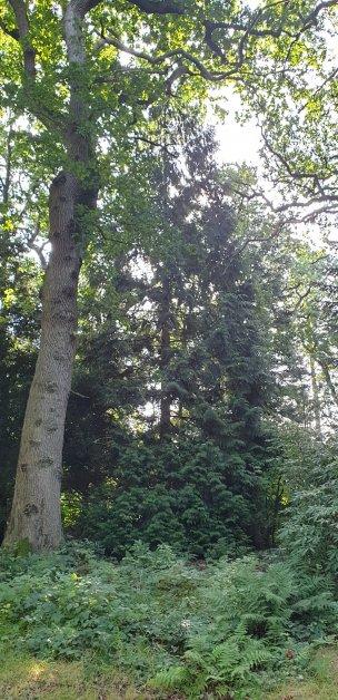 "Baum Nr. 212 ""Lebensbaum"""