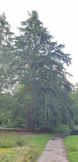 "Baum Nr. 218 ""Hemlocktanne"""