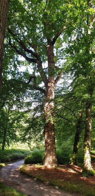 """Baum Nr. 221 """"Eiche"""""""