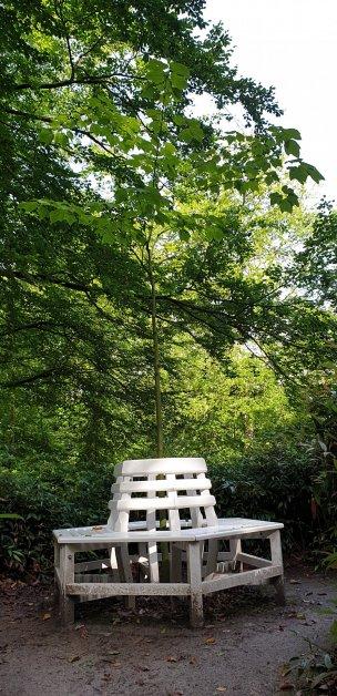 """Baum Nr. 224 """"Amerikanischer Schlangenhaut-Ahorn"""""""