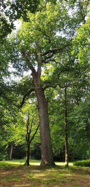 """Baum Nr. 225 """"Eiche"""""""