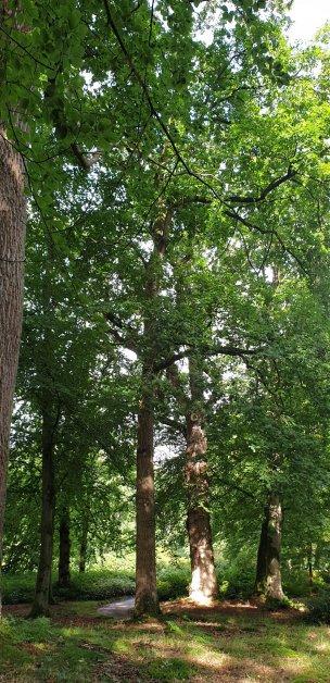 """Baum Nr. 226 """"Eiche"""""""