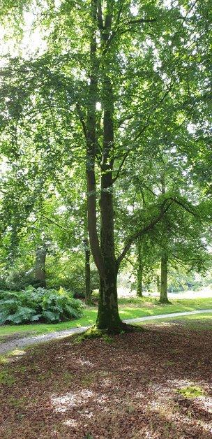 """Baum Nr. 228 """"Buche"""""""